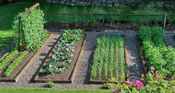 vegetable gardening in your backyard