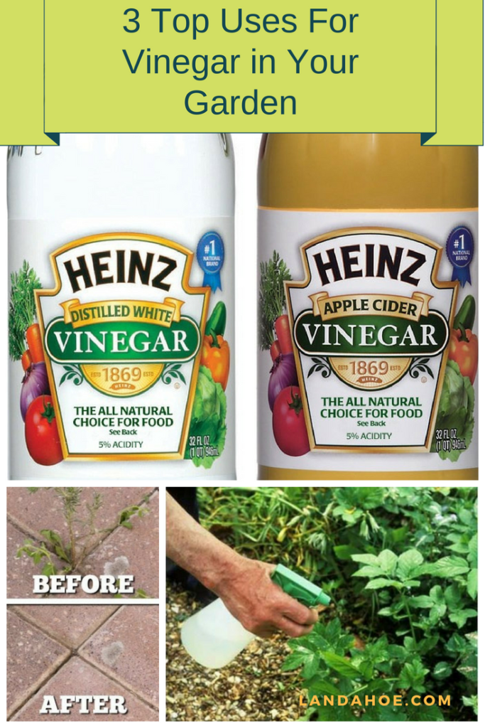 Top Uses For Vinegar in Garden