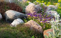 plants that grow on rocks without soil